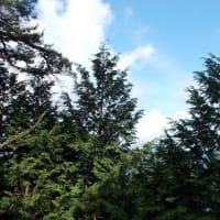 蒸し暑くて,時間内に山頂まで登れず情けない丹沢;塔ノ岳(2109年18回目)