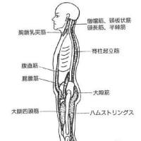 筋伸張位で行う鍼灸治療の生理学的意義 ver.1.1
