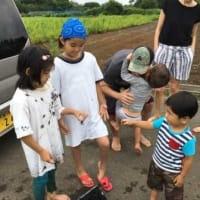 7月7日は田んぼの作業をやりました