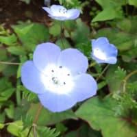 くりはま花の国(2021.05.09)