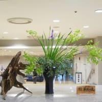 ・町田市民ホール・ロビー展示(リョウブ)