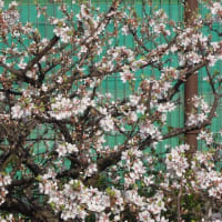マッキーの『四季を楽しむ』:春分も過ぎて春本番