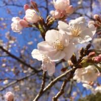 花に力をもらって、、、(櫻井郁也ダンスクラス、レッスン報告:3/21土2020)