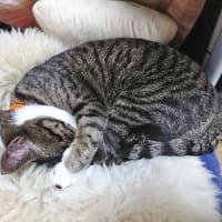5月28日(木) ~猫の麦とごまの日常日記~