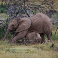 クルーガー国立公園Kruger National Park ⑤