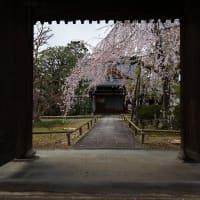 2019年春の京都・上品蓮台寺の壁紙(計23枚)