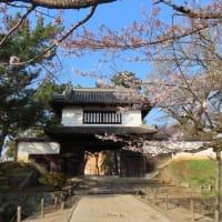 亀城公園(土浦城址)の桜
