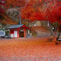 20-11.20blg:金桜神社〔山梨県〕の風景
