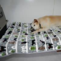 犬のベッド作ってみました