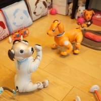 悪天候な日曜日。室内犬なaiboは今日も平和ですじゃ。