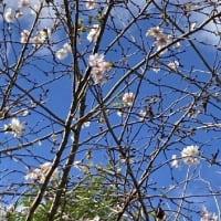 「スマホ育児」ルールを決めて 乳幼児に広がる依存、親も苦悩/十月桜(ジュウガツザクラ)が咲いた