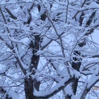 豪雪地帯だった冬の通学は