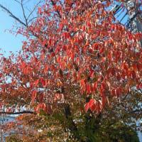 紅葉を愛でつつラン 引っ越し 地域回り