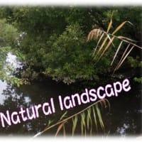 40年前はタナゴの宝庫だったのに~?高校生ボランティア実習~・・こんなに不法投棄?Natural landscape