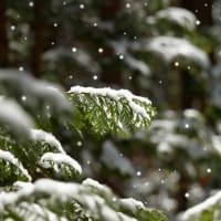 たのしい万葉集 み越道の雪降る山を越えむ日は・・・