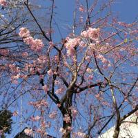 花びらだから。(3月21日・書記)