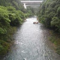 7月23日 増水の那比川で鮎釣り!