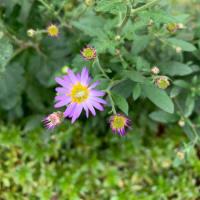 オサンポ walk - 植物plant: これから咲く I will be blooming in the near future