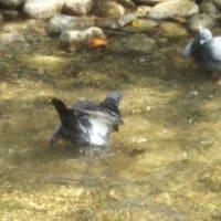 鳥の水浴びの懐かしい思い出