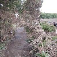 [577]台風後のもう少し後の江戸川