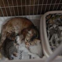 母猫の保護・親子で一緒に