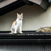 白隠の里にすむ猫たち
