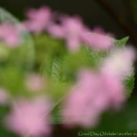 葉緑~はみどり
