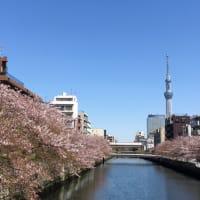 まだ桜がスカイツリーとコラボしてくれました。