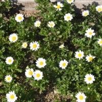 庭の花 (No 2344)