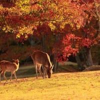 たのしい万葉集 秋風の吹き扱き敷ける花の庭・・・