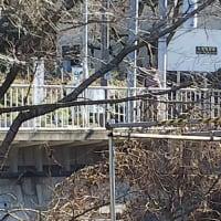 神奈川県  市町村対抗駅伝