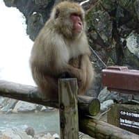 信州おでかけ日記その1「地獄谷野猿公苑」