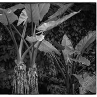 植物採集   Leica M Monochrom Capture One pro20