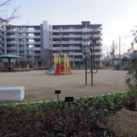公園の舗装