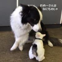 愛犬を失い 思うこと