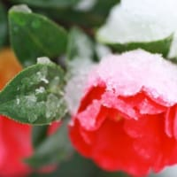 (1/2)風邪の予防と回復法(まず予防から)