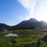 由布岳と田園風景