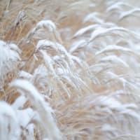 たのしい万葉集 婦負の野のすすき押しなべ降る雪に・・・