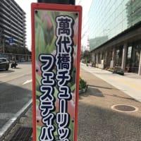 萬代橋チューリップフェスティバル