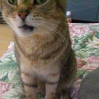 猫は白い歯がお好き?