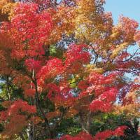 東福寺の紅葉見頃
