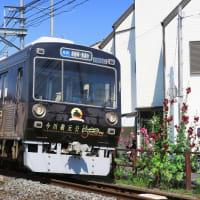 静岡鉄道は1000形「今川義元生誕五百年ラッピング」とタチアオイ (2019年6月 オマケはまたタピオカ)