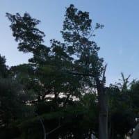 台風怖い… 直撃台風15号の後は