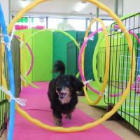セミナーのご案内です♪【ALOHA塾】  犬のしつけ教室@アロハドギー