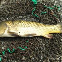 今週も県北の釣堀に行ってきた。