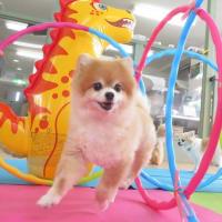 幼稚園体験にきてくれたカニンヘンダックスフンドの【るたくん】 犬のしつけ教室@アロハドギー