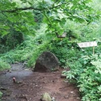 樹林帯はサウナ状態