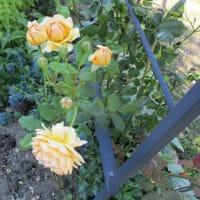 シュートに咲いた花摘み
