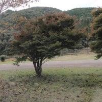 ☆★東古谷キャンプ場で秋キャンプ・・・その2