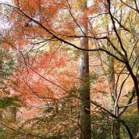 奈良・京都の旅7-二上山